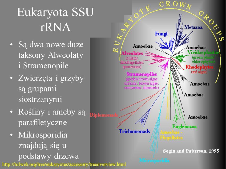 Eukaryota SSU rRNA Sogin and Patterson, 1995 Są dwa nowe duże taksony Alweolaty i Stramenopile Zwierzęta i grzyby są grupami siostrzanymi Rośliny i am
