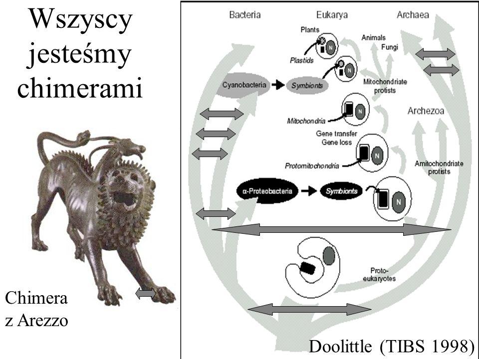 Wszyscy jesteśmy chimerami Chimera z Arezzo Doolittle (TIBS 1998)