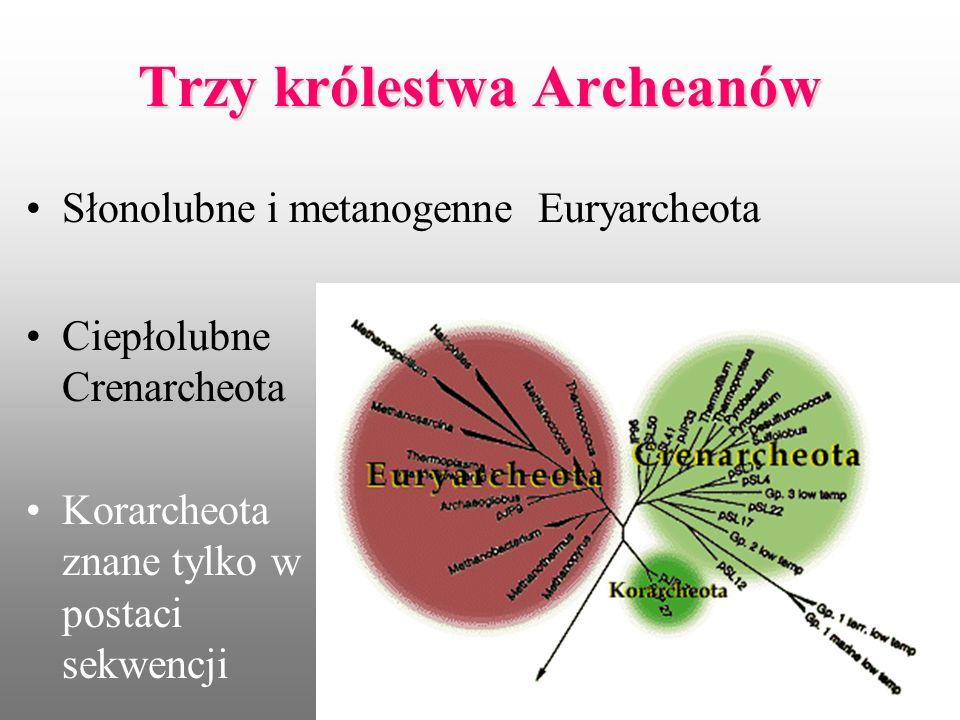 Trzy królestwa Archeanów Słonolubne i metanogenne Euryarcheota Ciepłolubne Crenarcheota Korarcheota znane tylko w postaci sekwencji