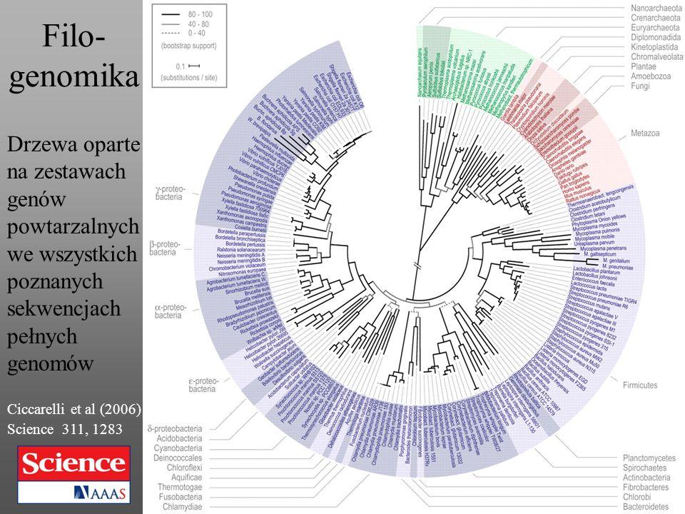 Filo- genomika Drzewa oparte na zestawach genów powtarzalnych we wszystkich poznanych sekwencjach pełnych genomów Ciccarelli et al (2006) Science 311,