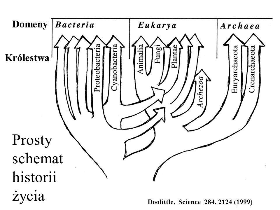 Prosty schemat historii życia Domeny Królestwa Doolittle, Science 284, 2124 (1999)