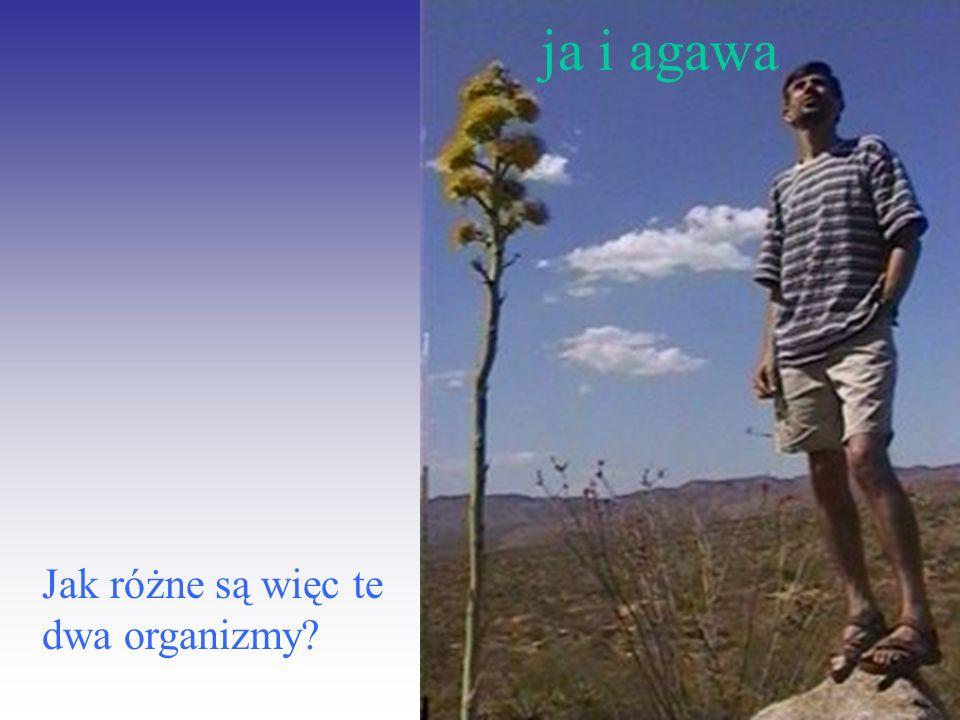ja i agawa Jak różne są więc te dwa organizmy?