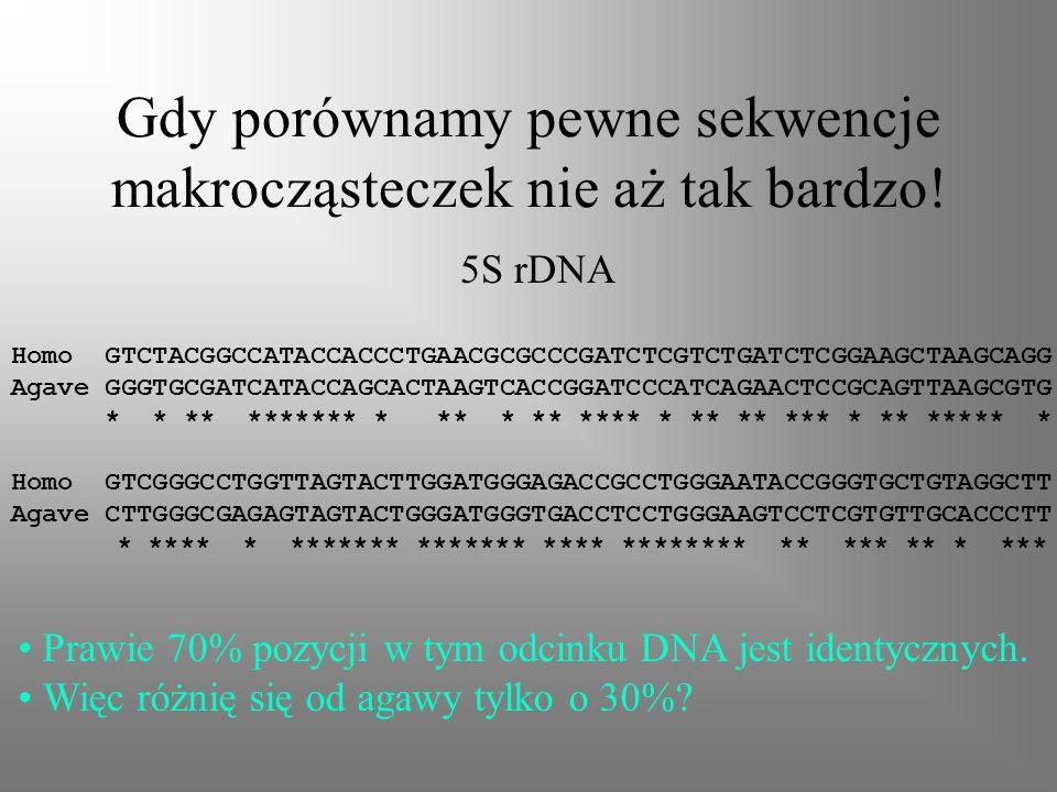 Gdy porównamy pewne sekwencje makrocząsteczek nie aż tak bardzo! Homo GTCTACGGCCATACCACCCTGAACGCGCCCGATCTCGTCTGATCTCGGAAGCTAAGCAGG Agave GGGTGCGATCATA