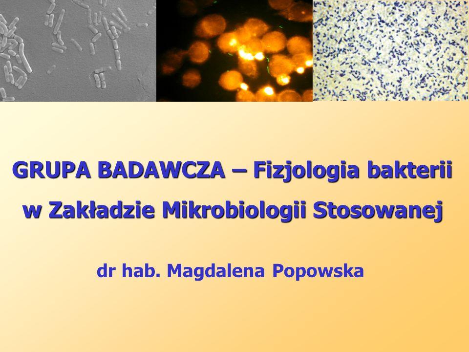 GRUPA BADAWCZA – Fizjologia bakterii w Zakładzie Mikrobiologii Stosowanej dr hab. Magdalena Popowska