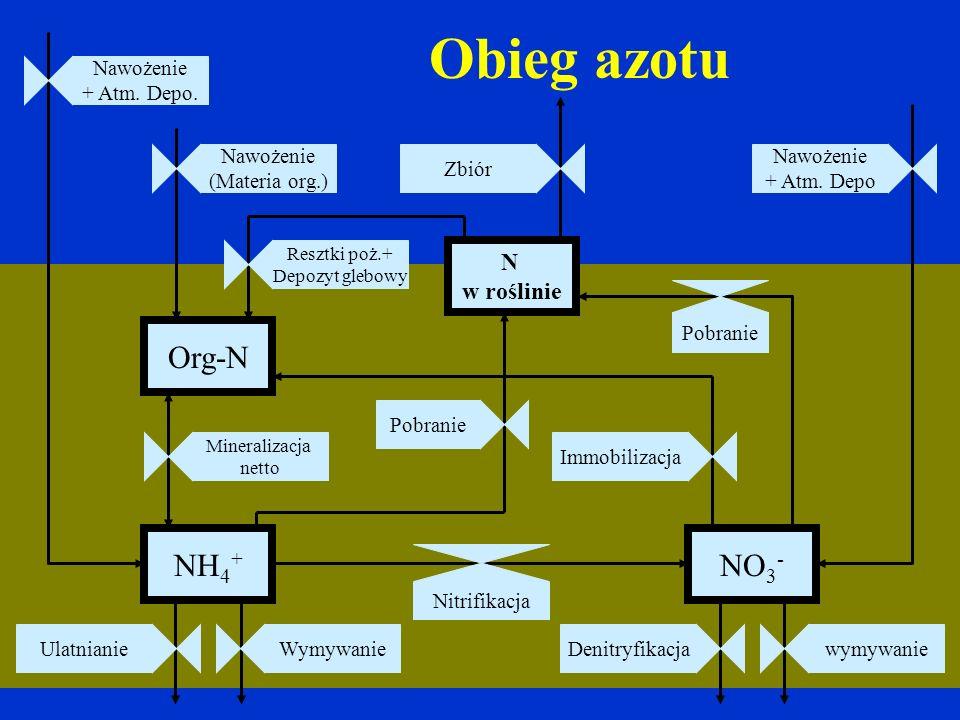 Obieg azotu NH 4 + NO 3 - Nitrifikacja Nawożenie + Atm. Depo Org-N N w roślinie Pobranie ZbiórImmobilizacjaPobranieDenitryfikacjawymywanieWymywanieUla