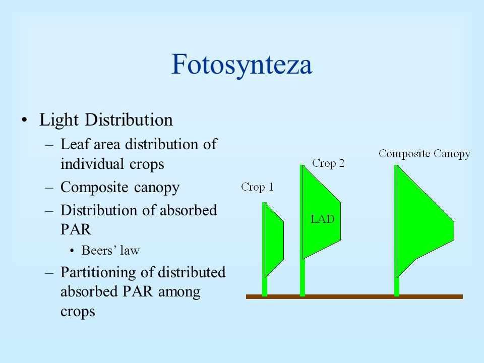 Fotosynteza Light Distribution –Leaf area distribution of individual crops –Composite canopy –Distribution of absorbed PAR Beers law –Partitioning of