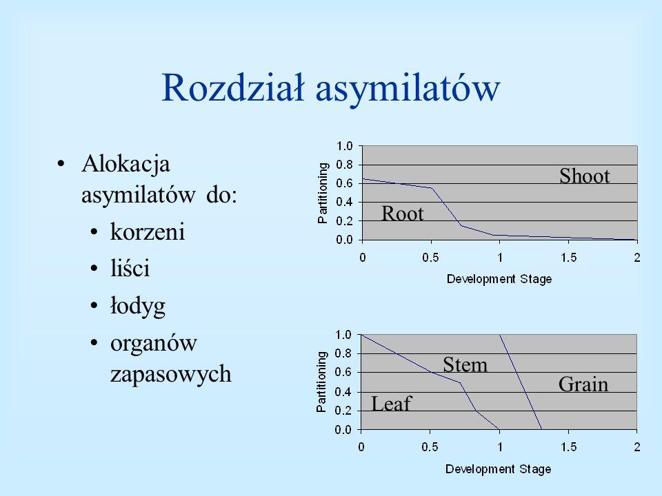 Rozdział asymilatów Alokacja asymilatów do: korzeni liści łodyg organów zapasowych Grain Root Shoot Leaf Stem