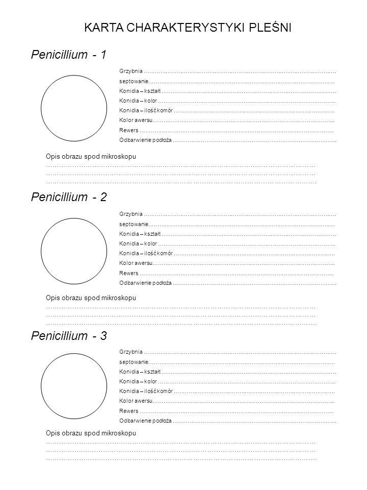 KARTA CHARAKTERYSTYKI PLEŚNI Penicillium - 1 Opis obrazu spod mikroskopu ………………………………………..………………………………………..……………………… ……………..………………………………………..………………………