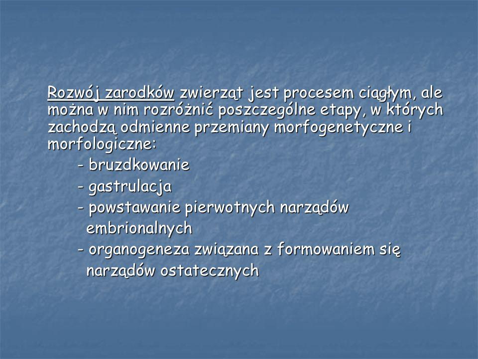 gastrulacja zarodka płazów
