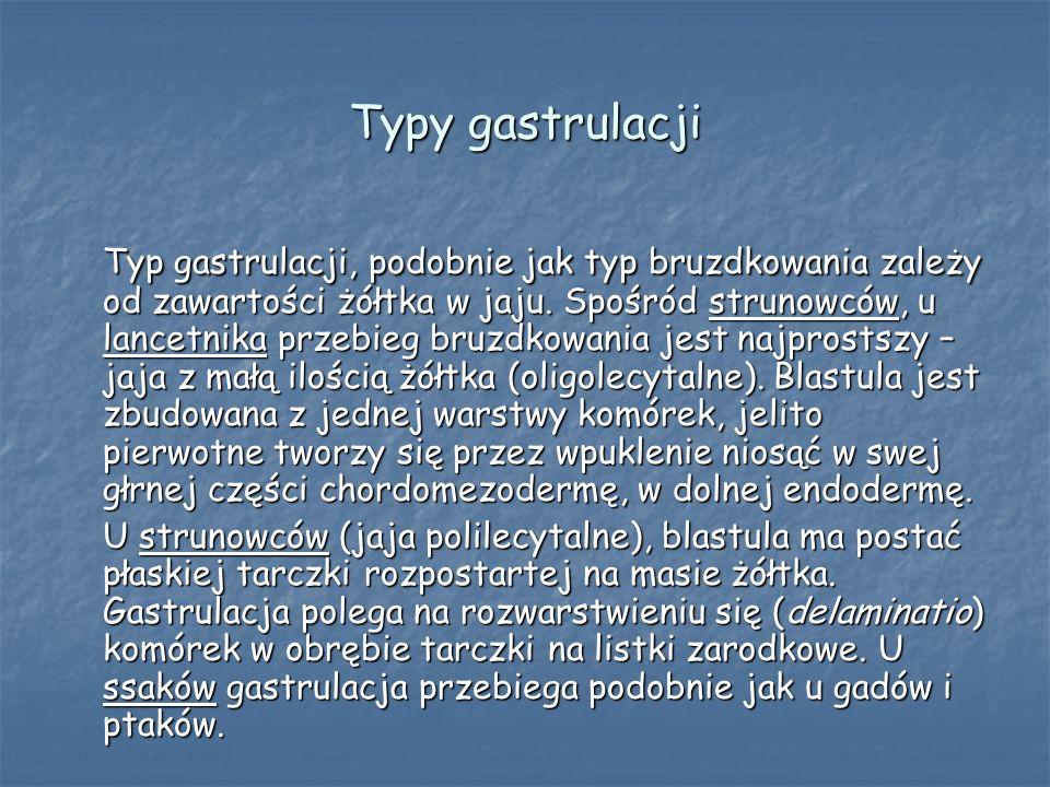 Typy gastrulacji Typ gastrulacji, podobnie jak typ bruzdkowania zależy od zawartości żółtka w jaju. Spośród strunowców, u lancetnika przebieg bruzdkow