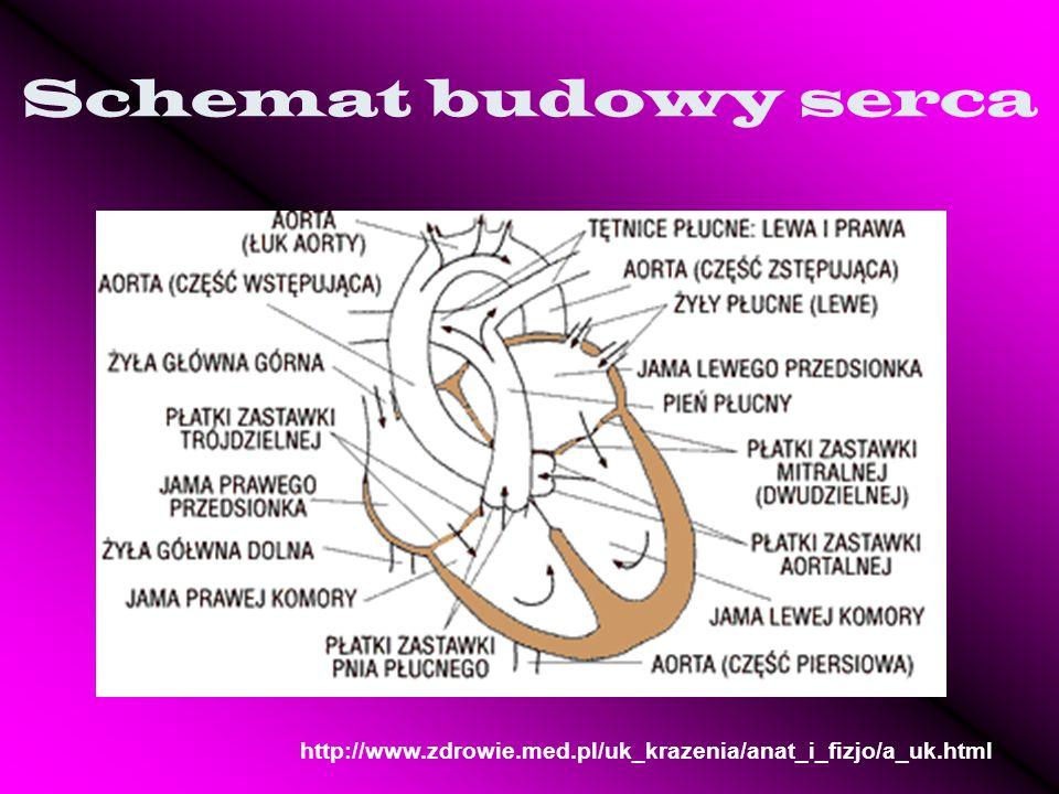 Schemat budowy serca