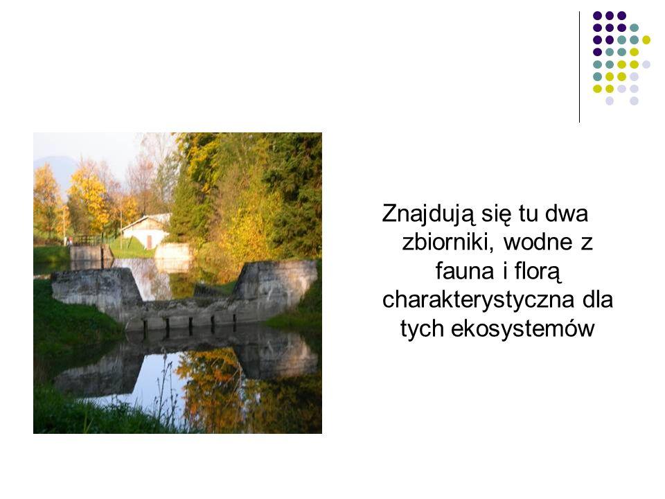 Znajdują się tu dwa zbiorniki, wodne z fauna i florą charakterystyczna dla tych ekosystemów