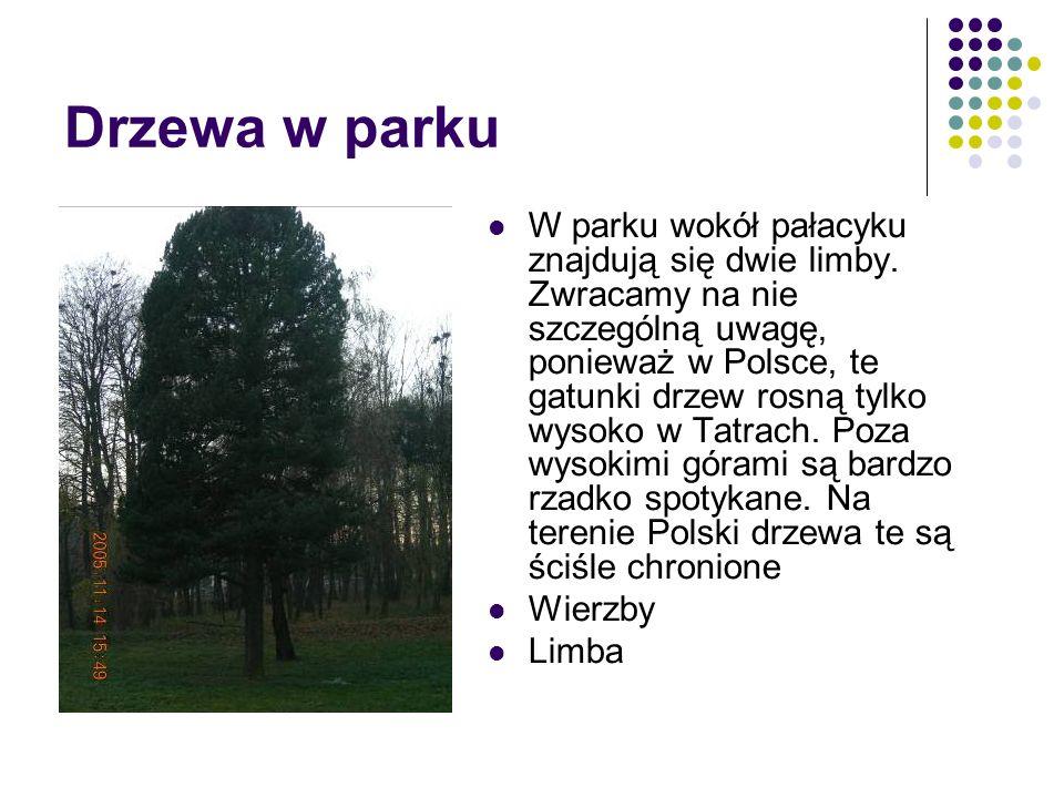 Drzewa w parku W parku wokół pałacyku znajdują się dwie limby. Zwracamy na nie szczególną uwagę, ponieważ w Polsce, te gatunki drzew rosną tylko wysok