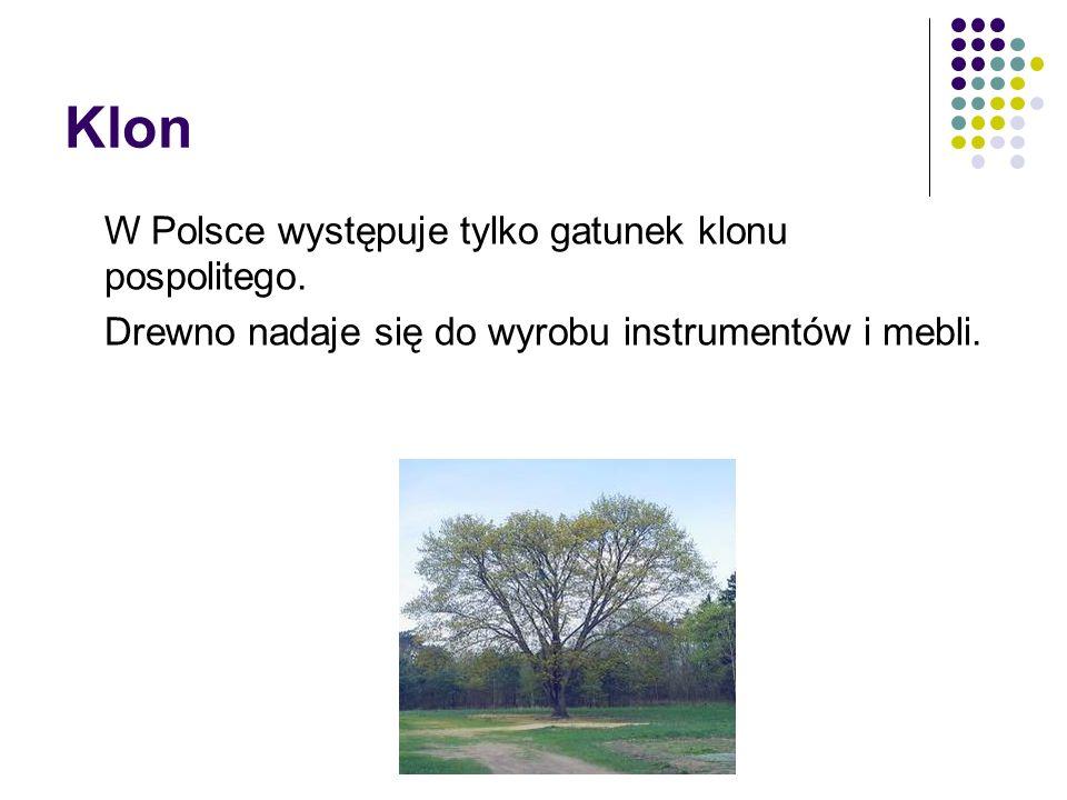 Klon W Polsce występuje tylko gatunek klonu pospolitego. Drewno nadaje się do wyrobu instrumentów i mebli.