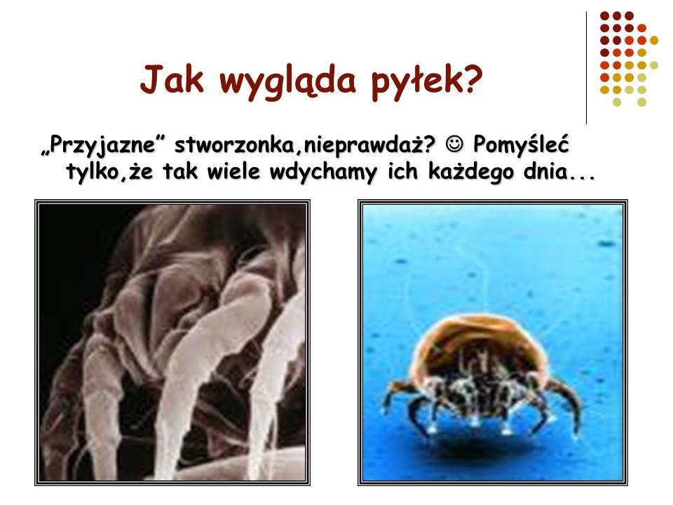 Jak wygląda pyłek? Przyjazne stworzonka,nieprawdaż? Pomyśleć tylko,że tak wiele wdychamy ich każdego dnia...