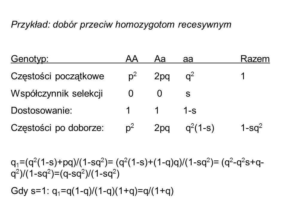 Przykład: dobór przeciw homozygotom recesywnym Genotyp: AAAaaa Razem Częstości początkowe p 2 2pq q 2 1 Współczynnik selekcji 0 0 s Dostosowanie:111-s