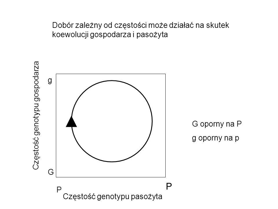 Częstość genotypu pasożyta Częstość genotypu gospodarza P P G g G oporny na P g oporny na p Dobór zależny od częstości może działać na skutek koewoluc