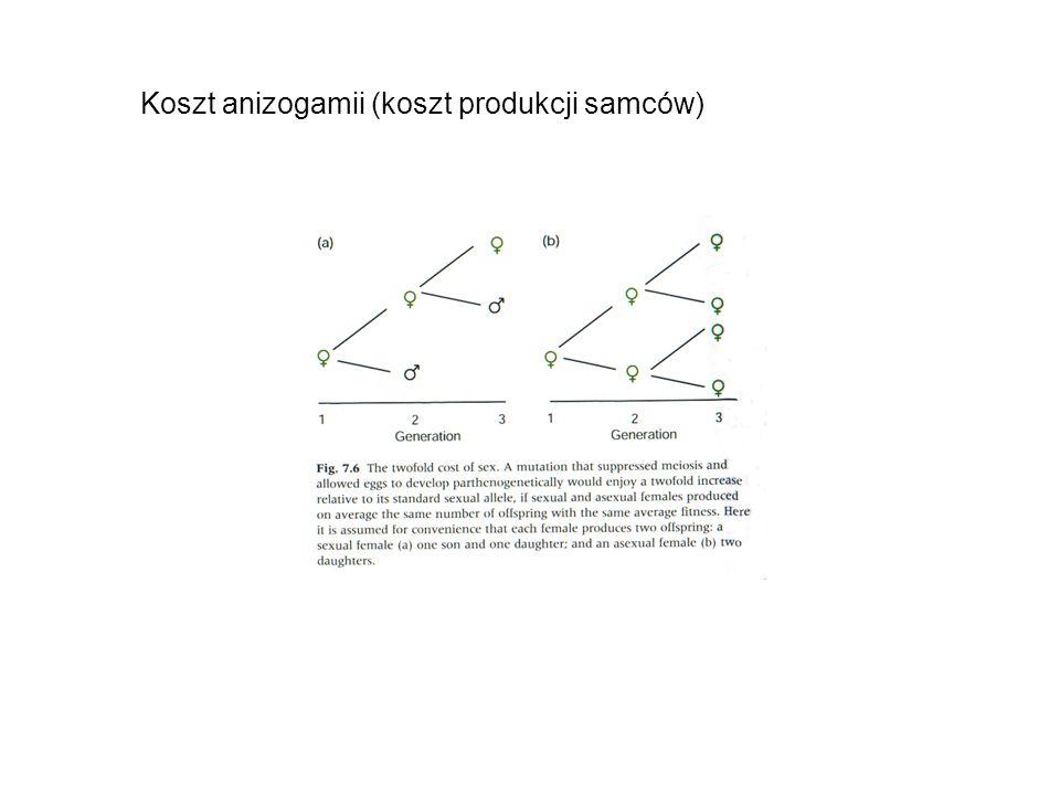 Koszt anizogamii (koszt produkcji samców)