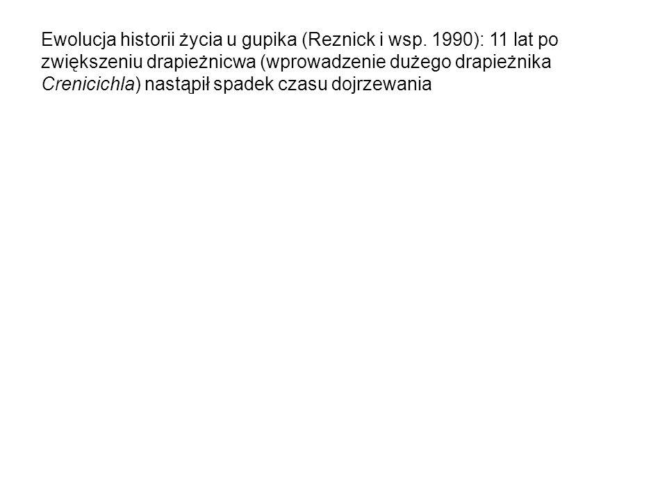 Ewolucja historii życia u gupika (Reznick i wsp. 1990): 11 lat po zwiększeniu drapieżnicwa (wprowadzenie dużego drapieżnika Crenicichla) nastąpił spad