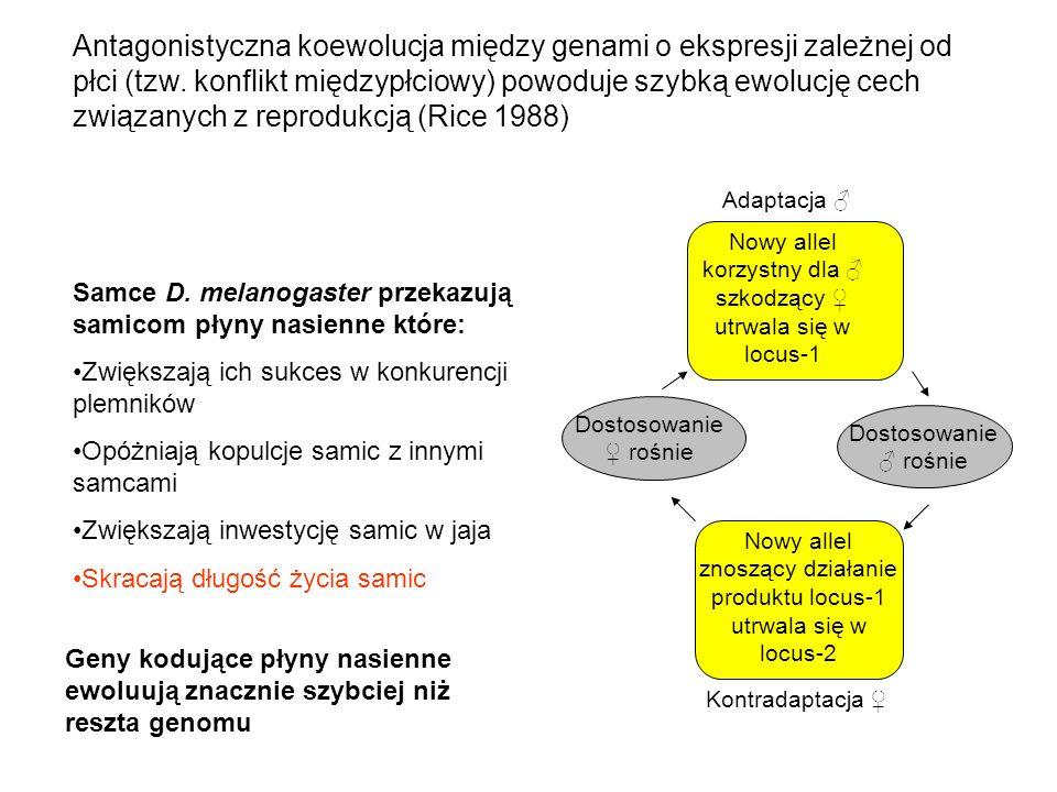 Antagonistyczna koewolucja między genami o ekspresji zależnej od płci (tzw. konflikt międzypłciowy) powoduje szybką ewolucję cech związanych z reprodu