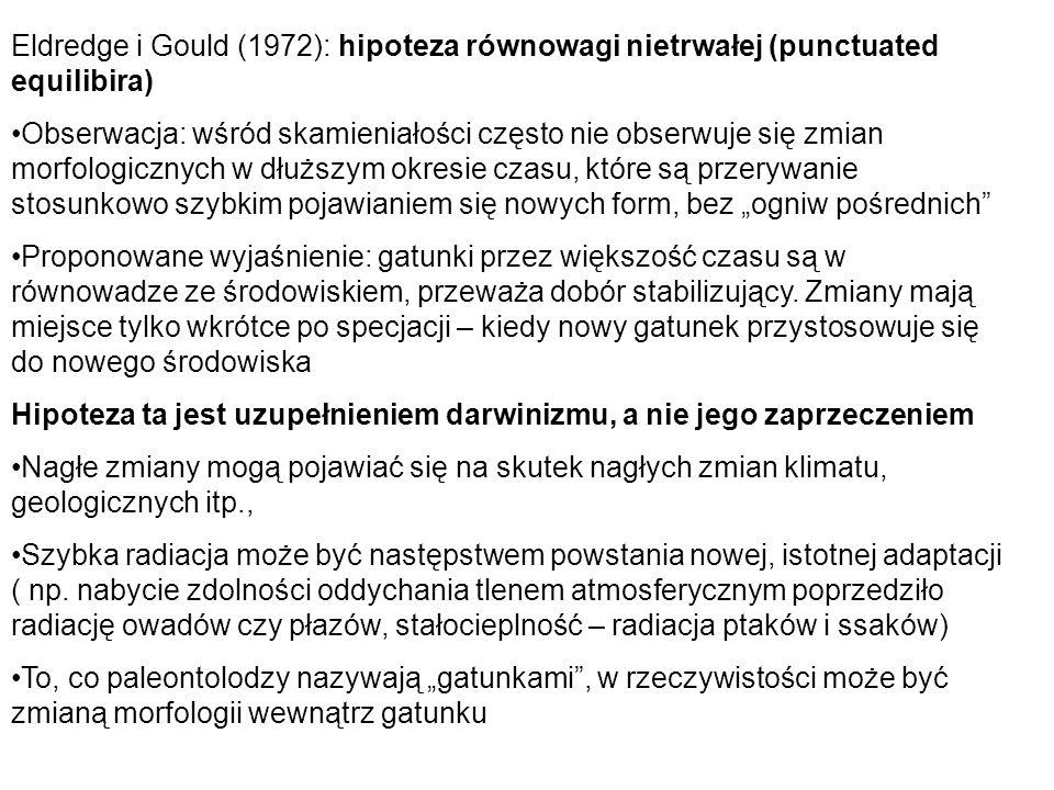 Eldredge i Gould (1972): hipoteza równowagi nietrwałej (punctuated equilibira) Obserwacja: wśród skamieniałości często nie obserwuje się zmian morfolo