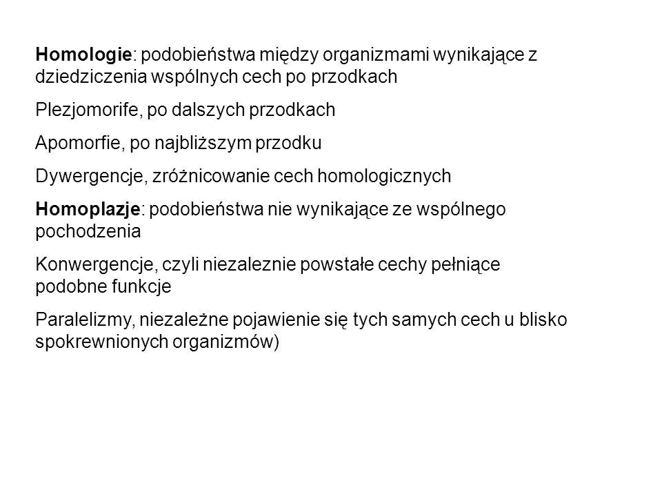 Homologie: podobieństwa między organizmami wynikające z dziedziczenia wspólnych cech po przodkach Plezjomorife, po dalszych przodkach Apomorfie, po na
