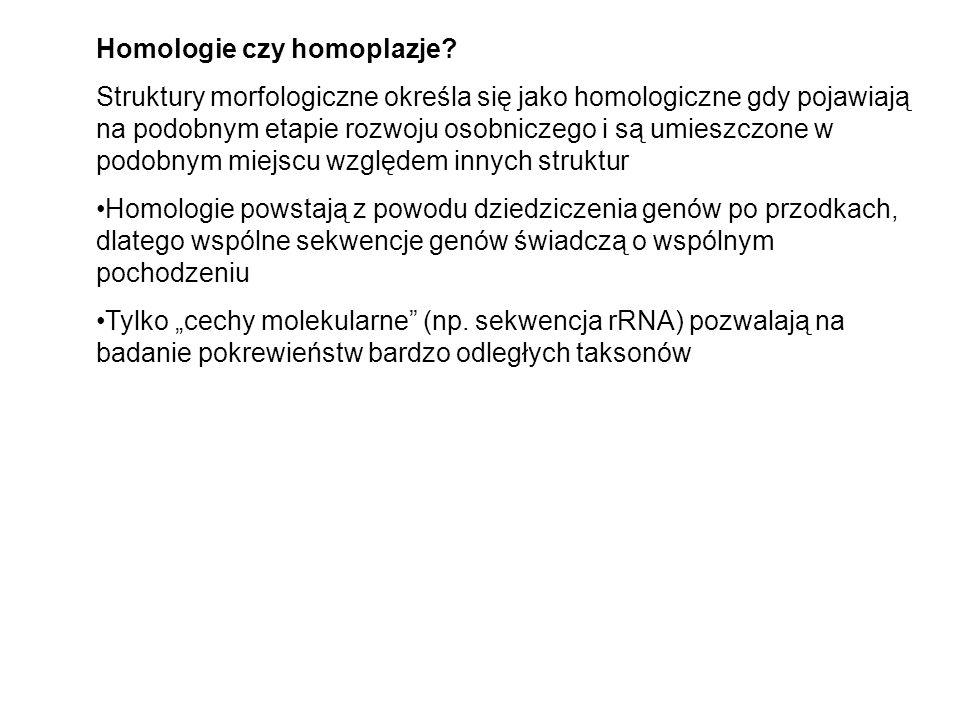 Homologie czy homoplazje? Struktury morfologiczne określa się jako homologiczne gdy pojawiają na podobnym etapie rozwoju osobniczego i są umieszczone