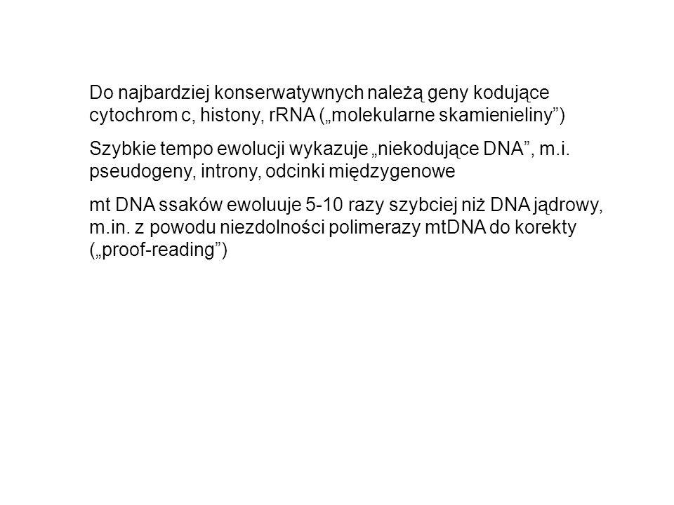 Do najbardziej konserwatywnych należą geny kodujące cytochrom c, histony, rRNA (molekularne skamienieliny) Szybkie tempo ewolucji wykazuje niekodujące