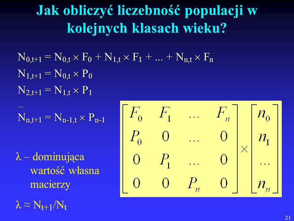 21 Jak obliczyć liczebność populacji w kolejnych klasach wieku? N 0,t+1 = N 0,t F 0 + N 1,t F 1 +... + N n,t F n N 1,t+1 = N 0,t P 0 N 2,t+1 = N 1,t P