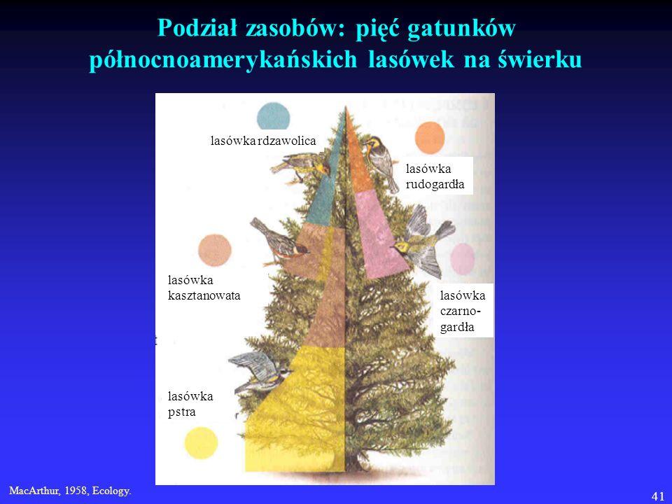 41 Podział zasobów: pięć gatunków północnoamerykańskich lasówek na świerku MacArthur, 1958, Ecology. lasówka rdzawolica lasówka rudogardła lasówka cza