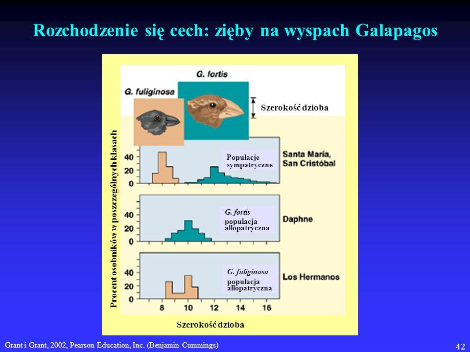 42 Rozchodzenie się cech: zięby na wyspach Galapagos Grant i Grant, 2002, Pearson Education, Inc. (Benjamin Cummings) Szerokość dzioba Procent osobnik