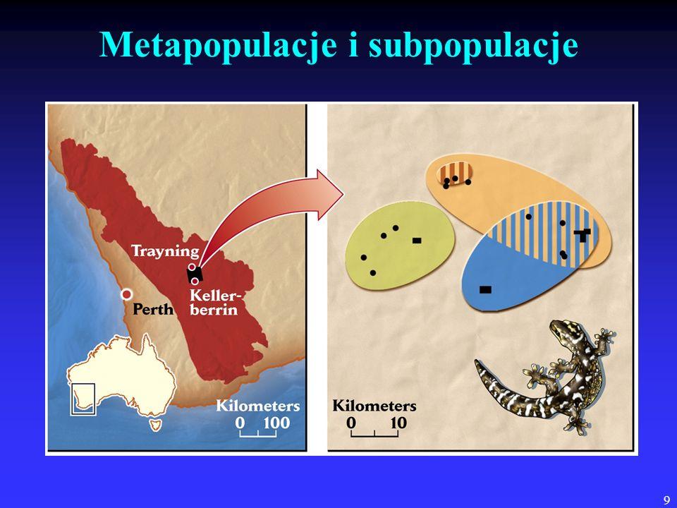 9 Metapopulacje i subpopulacje