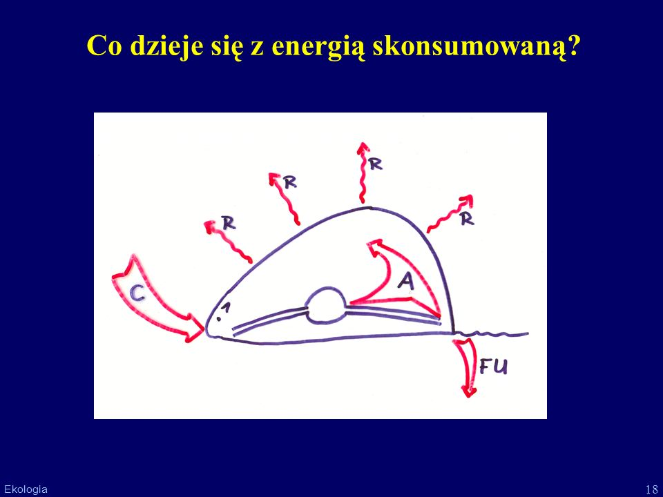 18 Ekologia Co dzieje się z energią skonsumowaną?