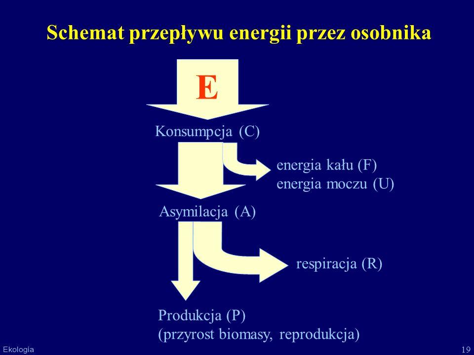 19 Ekologia Schemat przepływu energii przez osobnika E Konsumpcja (C) Asymilacja (A) Produkcja (P) (przyrost biomasy, reprodukcja) energia kału (F) en