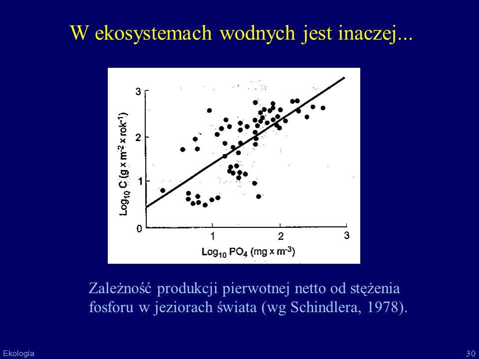 30 Ekologia W ekosystemach wodnych jest inaczej... Zależność produkcji pierwotnej netto od stężenia fosforu w jeziorach świata (wg Schindlera, 1978).
