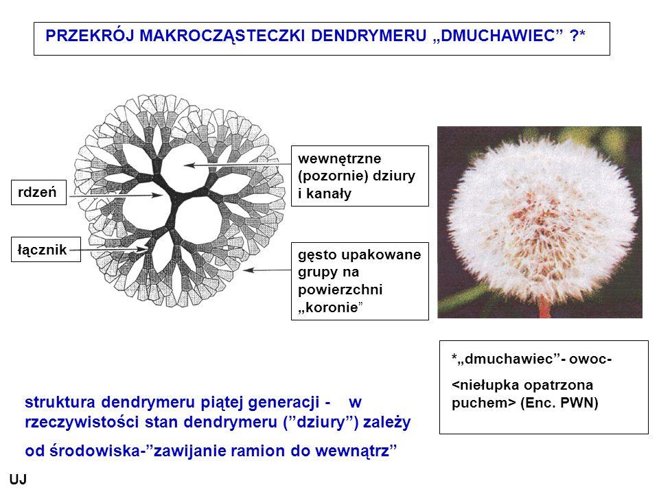 PRZEKRÓJ MAKROCZĄSTECZKI DENDRYMERU DMUCHAWIEC ?* wewnętrzne (pozornie) dziury i kanały gęsto upakowane grupy na powierzchni koronie rdzeń łącznik str