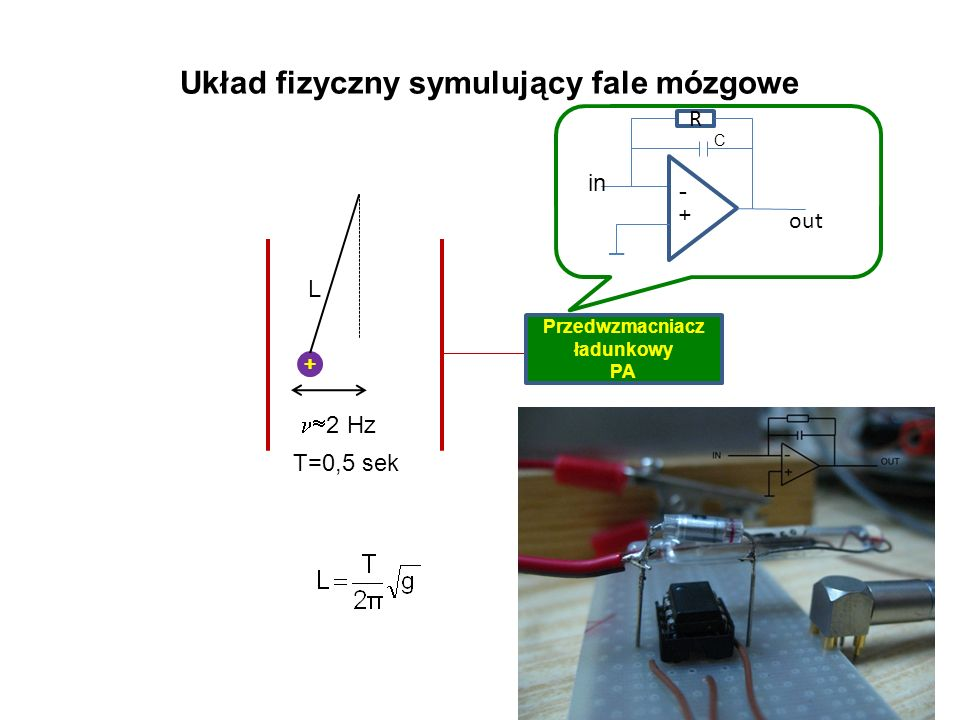 Układ fizyczny symulujący fale mózgowe + 2 Hz Przedwzmacniacz ładunkowy PA L T=0,5 sek out + R in C -