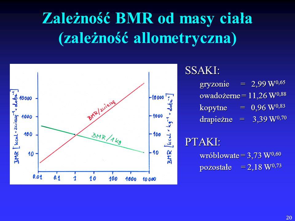 20 Zależność BMR od masy ciała (zależność allometryczna) SSAKI: gryzonie = 2,99 W 0,65 owadożerne = 11,26 W 0,88 kopytne = 0,96 W 0,83 drapieżne = 3,3