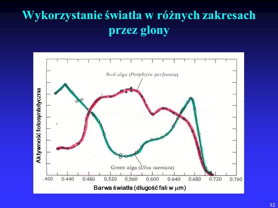 32 Wykorzystanie światła w różnych zakresach przez glony Barwa światła (długość fali w m) Aktywność fotosyntetyczna