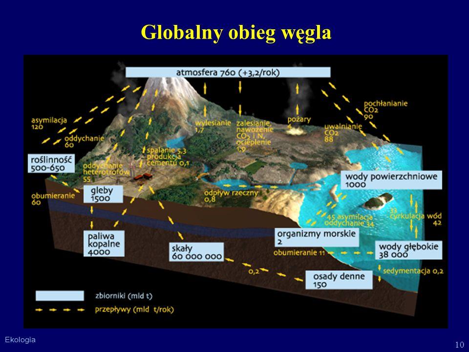 10 Ekologia Globalny obieg węgla