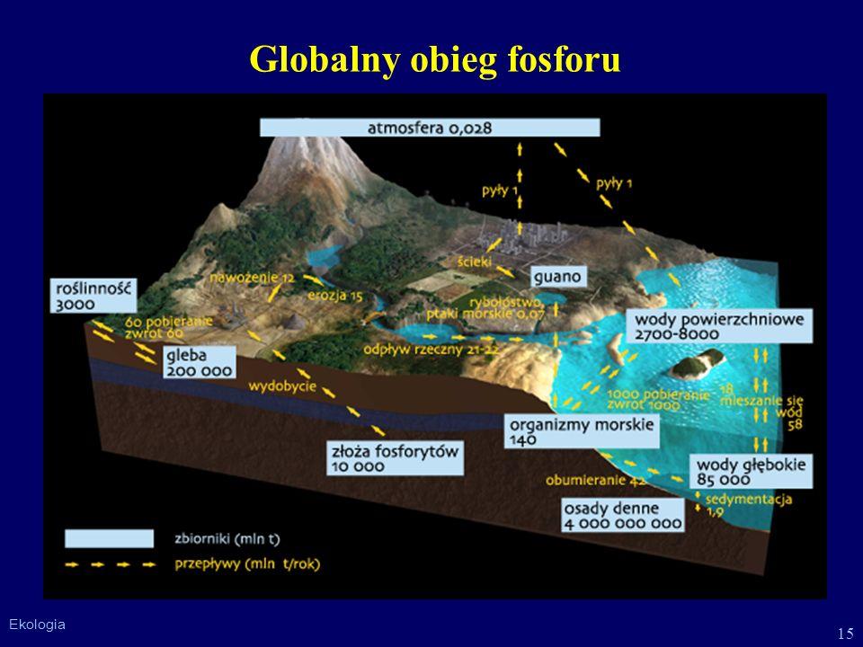 15 Ekologia Globalny obieg fosforu