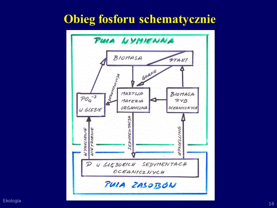 16 Ekologia Obieg fosforu schematycznie
