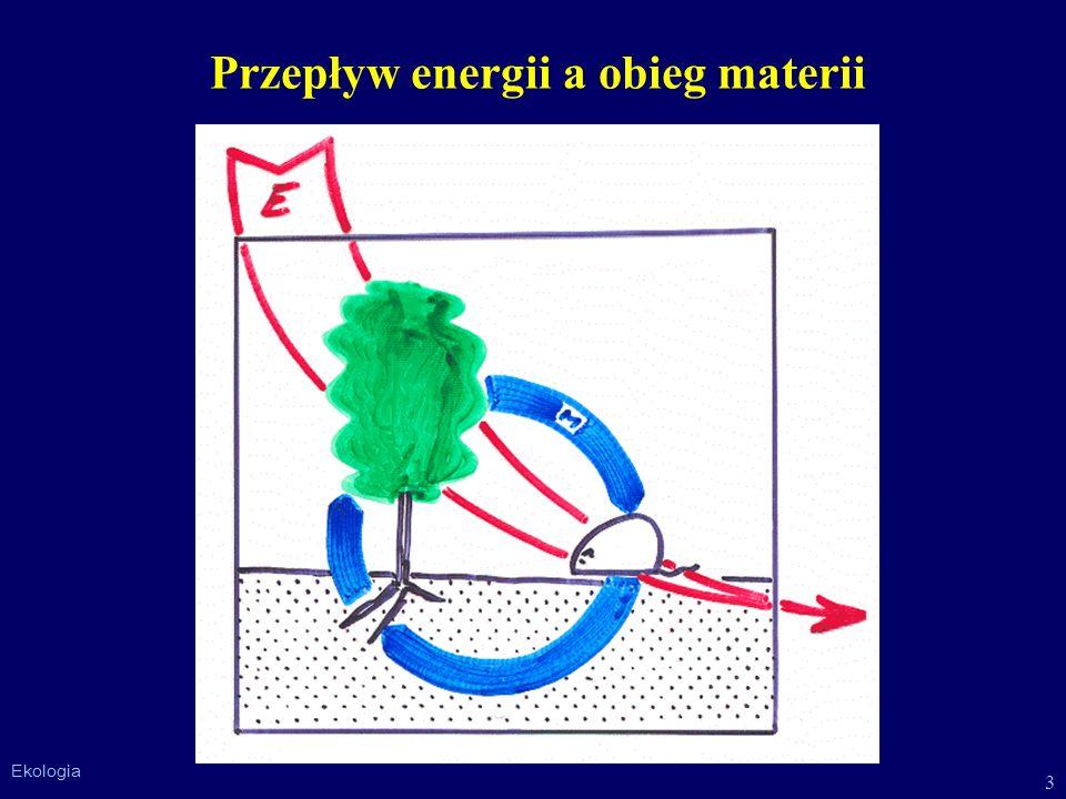 3 Ekologia Przepływ energii a obieg materii