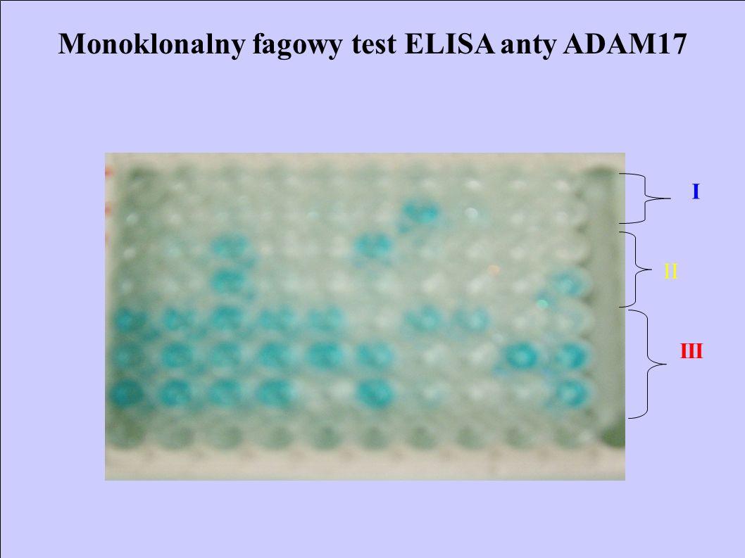 Monoklonalny fagowy test ELISA anty ADAM17 I II III