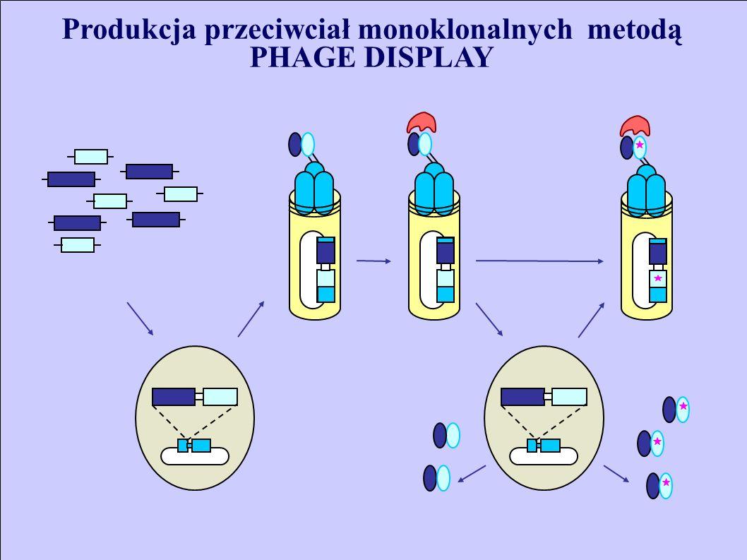 Produkcja przeciwciał monoklonalnych metodą PHAGE DISPLAY