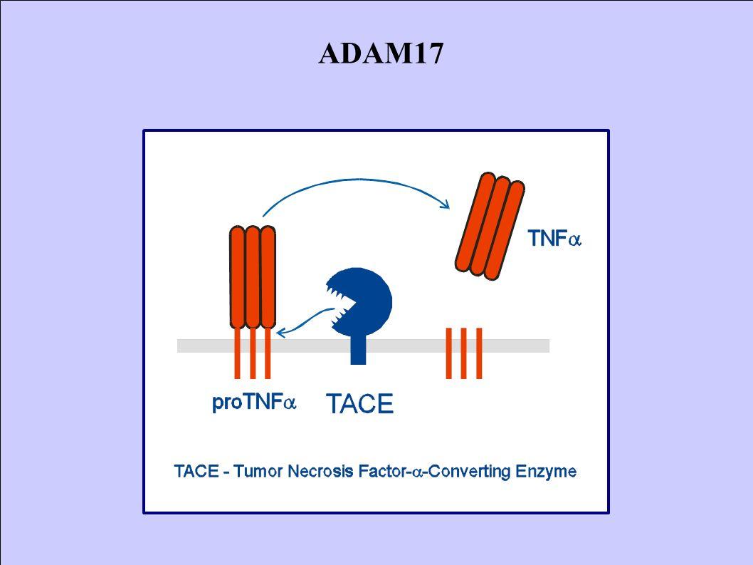 ADAM17