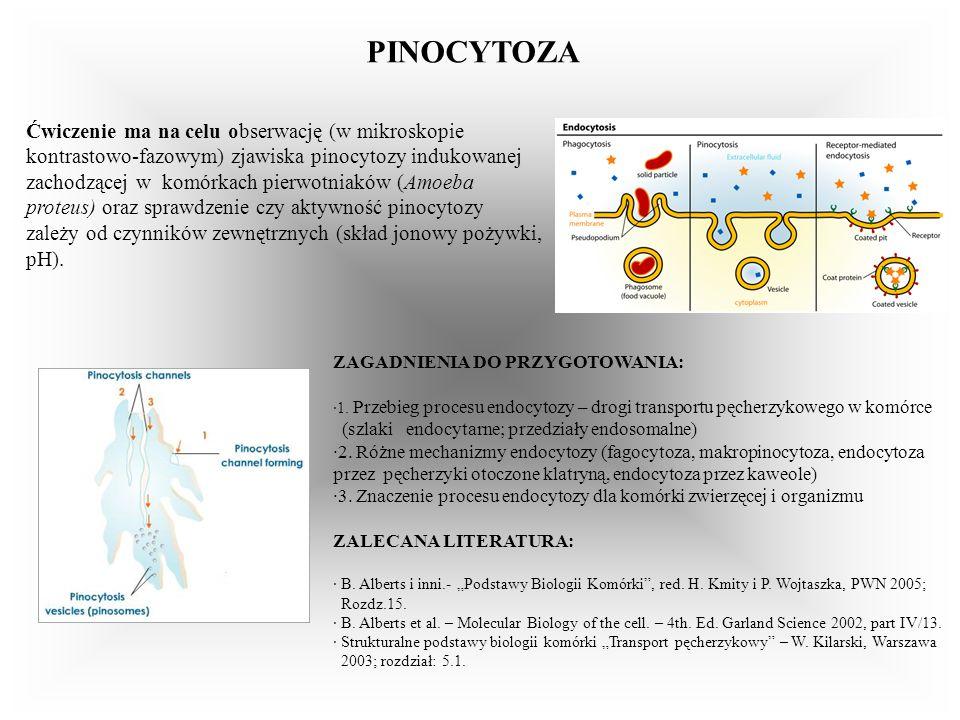 PINOCYTOZA ZAGADNIENIA DO PRZYGOTOWANIA: ·1. Przebieg procesu endocytozy – drogi transportu pęcherzykowego w komórce (szlaki endocytarne; przedziały e