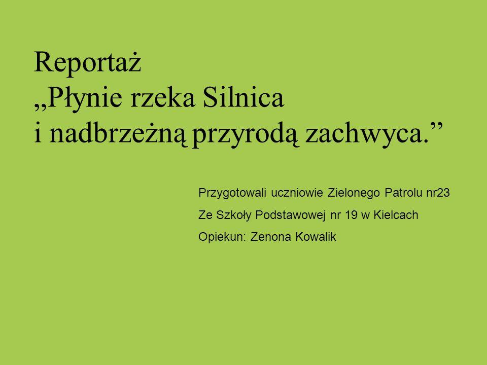 Reportaż Płynie rzeka Silnica i nadbrzeżną przyrodą zachwyca. Przygotowali uczniowie Zielonego Patrolu nr23 Ze Szkoły Podstawowej nr 19 w Kielcach Opi