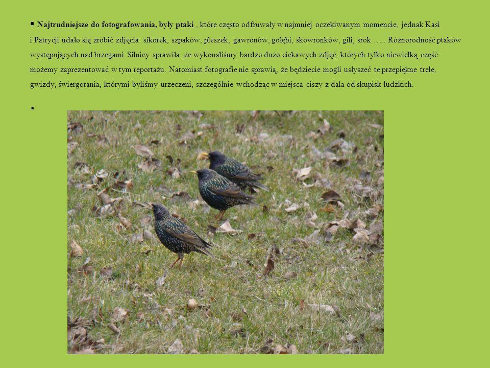 Najtrudniejsze do fotografowania, były ptaki, które często odfruwały w najmniej oczekiwanym momencie, jednak Kasi i Patrycji udało się zrobić zdjęcia: