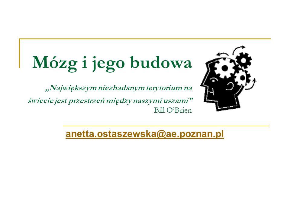Mózg i jego budowa Największym niezbadanym terytorium na świecie jest przestrzeń między naszymi uszami Bill OBrien anetta.ostaszewska@ae.poznan.pl@ae.